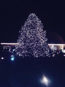 Weihnachtsbaum des Gut Boeckel